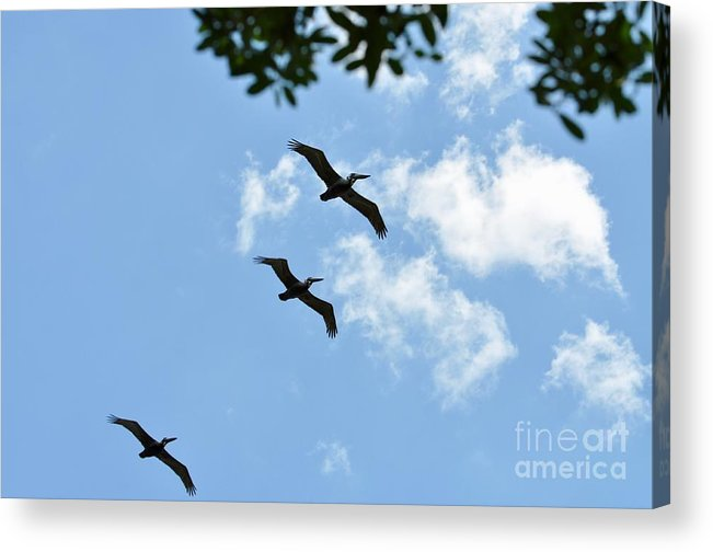 Pelican Acrylic Print featuring the photograph Fly Over by Christina McKinney
