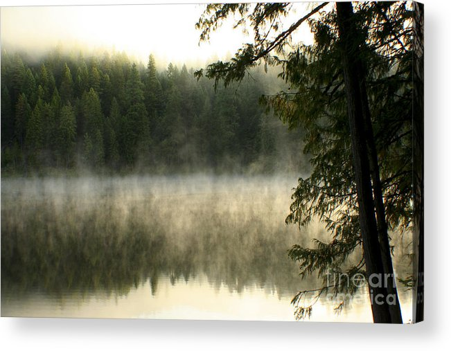 Fog Acrylic Print featuring the photograph Forest And Fog by Idaho Scenic Images Linda Lantzy