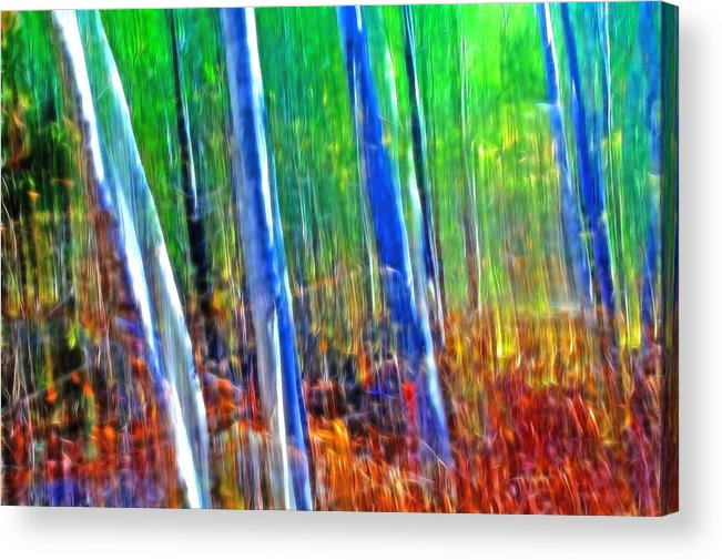 Forest Acrylic Print featuring the photograph Forest Magic by Bill Morgenstern