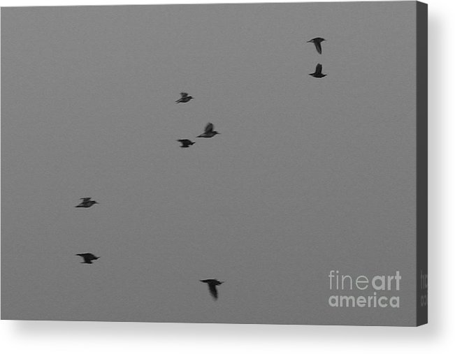 Bird Acrylic Print featuring the photograph Four Birds by Aston Pershing
