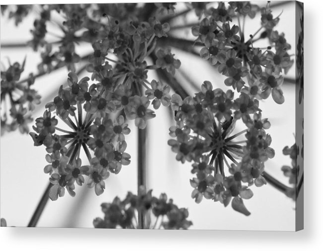 ryankellyphotography@gmail.com Acrylic Print featuring the photograph Fractal Flower Photoset 02 by Ryan Kelly