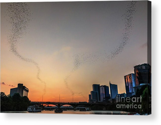 Austin Images Acrylic Print featuring the photograph From The Congress Avenue Bridge, Silhouetted Crowds And Onlookers Watch Mexican Free-tailed Bats Stream Into The Sunset For A Night Of Consuming Insects by Austin Bat Tours