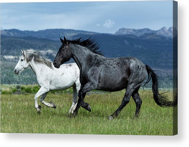 Wyoming Acrylic Print featuring the photograph Galloping Through The Scenery by Kay Brewer