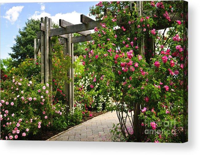 Garden Acrylic Print featuring the photograph Garden With Roses by Elena Elisseeva