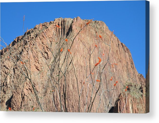 Ocatillo Acrylic Print featuring the photograph Geology Sans Cantus by Thor Sigstedt