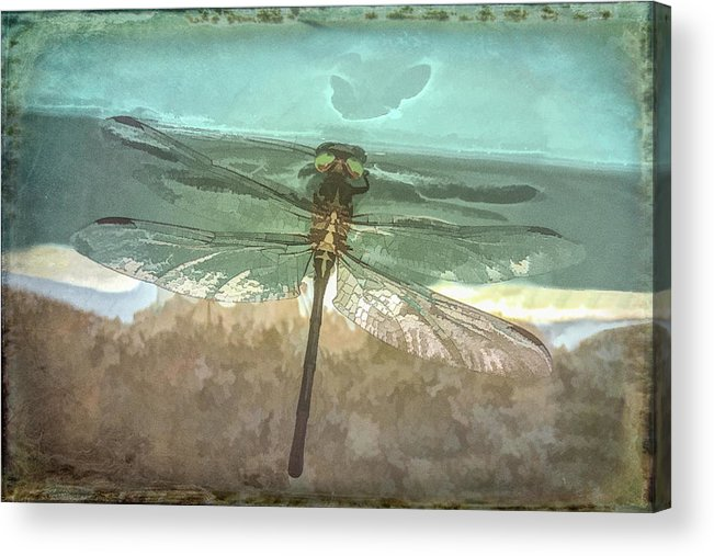 Dragon Acrylic Print featuring the photograph Glistening In Nature by Debra and Dave Vanderlaan