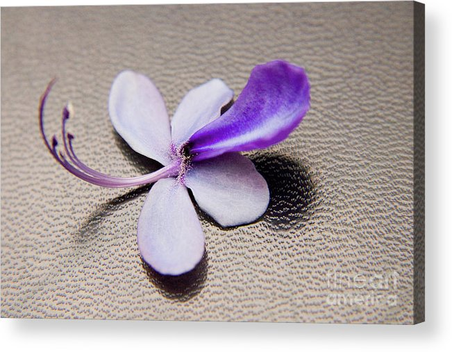 Nature Acrylic Print featuring the photograph Glorybower Patio Tree Flower by Julia Hiebaum