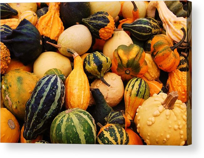 Squash Acrylic Print featuring the photograph Gourds by Jame Hayes