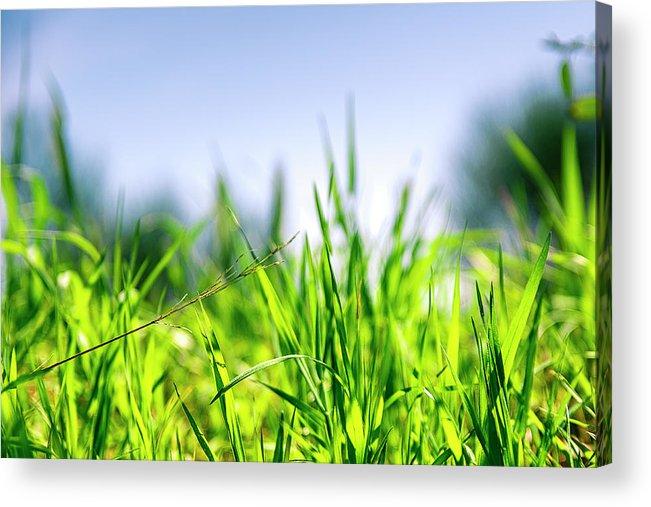 Grass Acrylic Print featuring the photograph Grass by Nikos Stavrakas