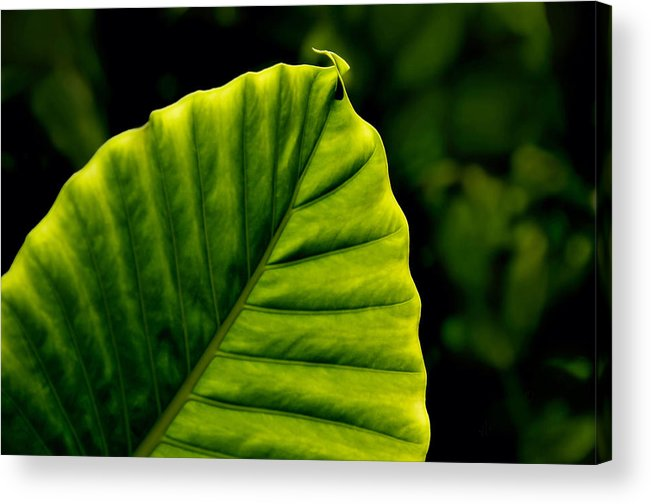 Leaf Acrylic Print featuring the photograph Green Leaf by Lyle Huisken