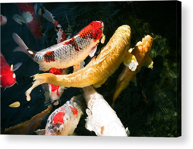 Fish Acrylic Print featuring the photograph Group Of Koi Fish by Dean Triolo