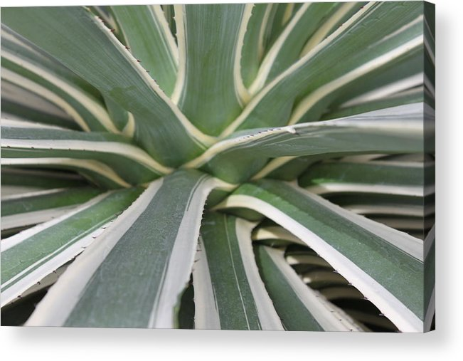 Nature Acrylic Print featuring the photograph Growth by Munir Alawi