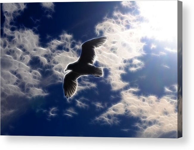 Bird Acrylic Print featuring the photograph Gull Against Sky Fractal by Lawrence Christopher