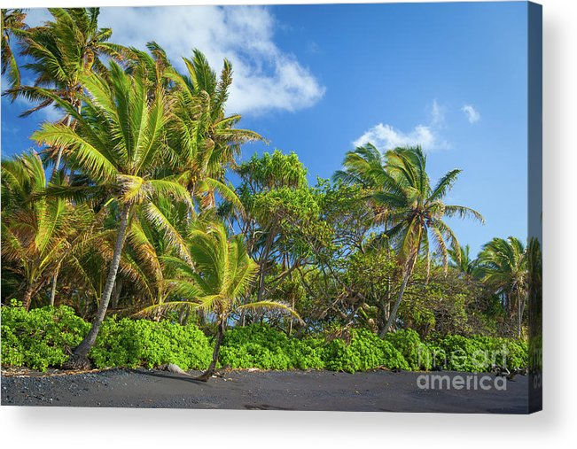 America Acrylic Print featuring the photograph Hana Palm Tree Grove by Inge Johnsson