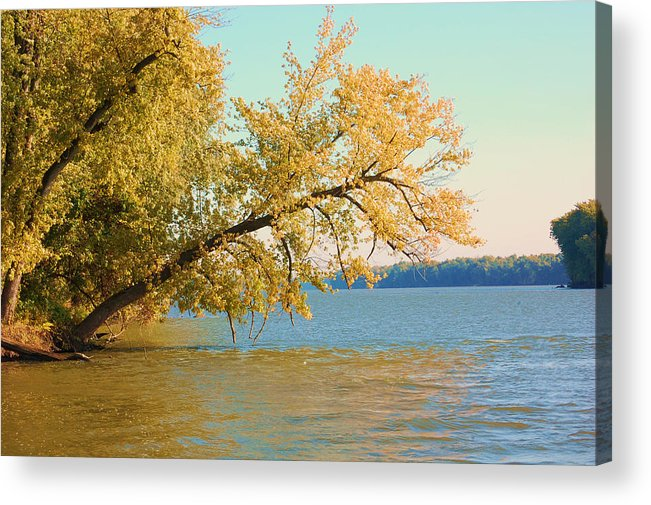 Tree Acrylic Print featuring the photograph Hanging Out by Jame Hayes