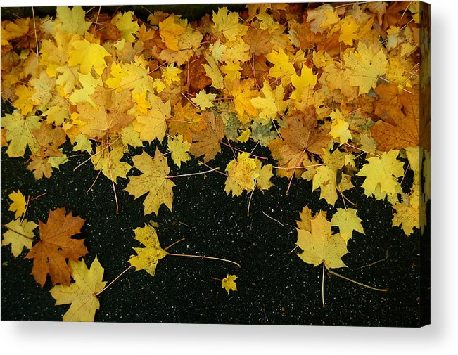 Fall Acrylic Print featuring the photograph Happy Fall by Mandy Wiltse