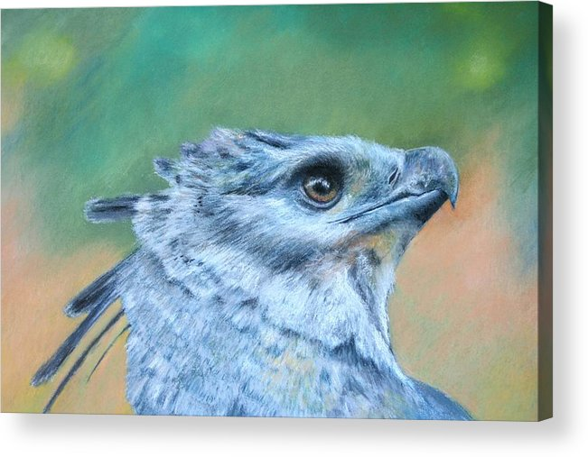 Rainforest Acrylic Print featuring the painting Harpy Eagle Two by Ceci Watson