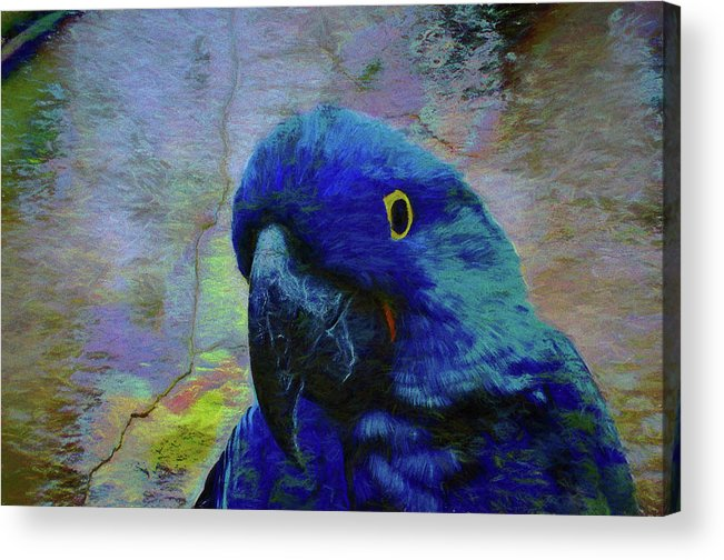 Birds Acrylic Print featuring the photograph He Just Cracks Me Up by Jan Amiss Photography