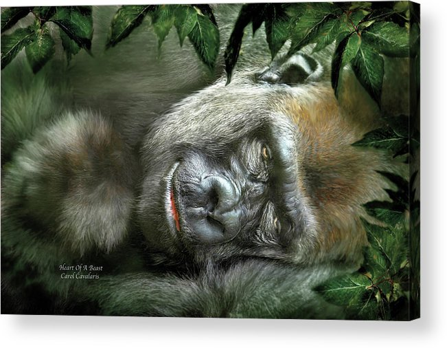 Gorilla Acrylic Print featuring the mixed media Heart Of A Beast by Carol Cavalaris