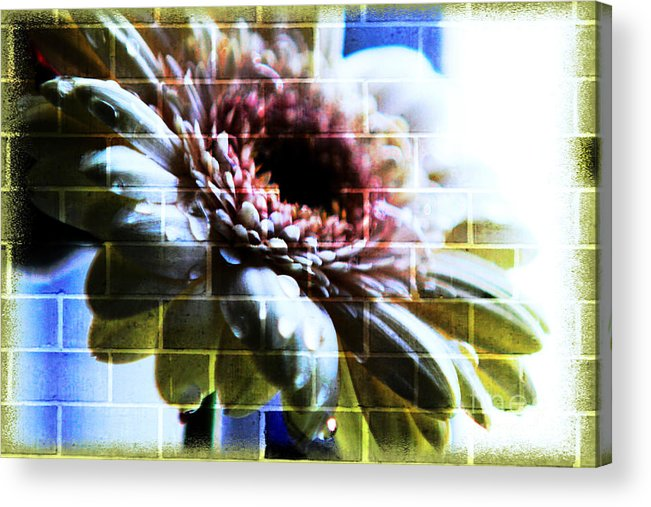 Abstract Flowers Acrylic Print featuring the photograph Hiding In The Shadow by Lori Mellen-Pagliaro