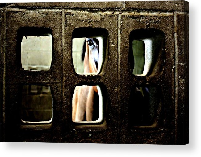 Horse Acrylic Print featuring the photograph Hiding by Jill Tennison