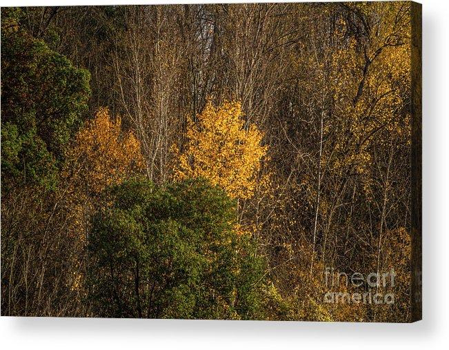 Autumn Acrylic Print featuring the photograph Hillside Autumn by Marv Vandehey