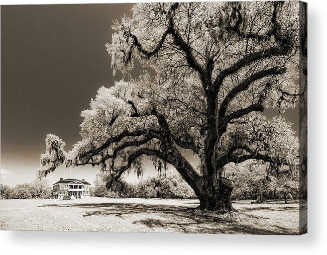 Historic Acrylic Print featuring the photograph Historic Drayton Hall In Charleston South Carolina Live Oak Tree by Dustin K Ryan