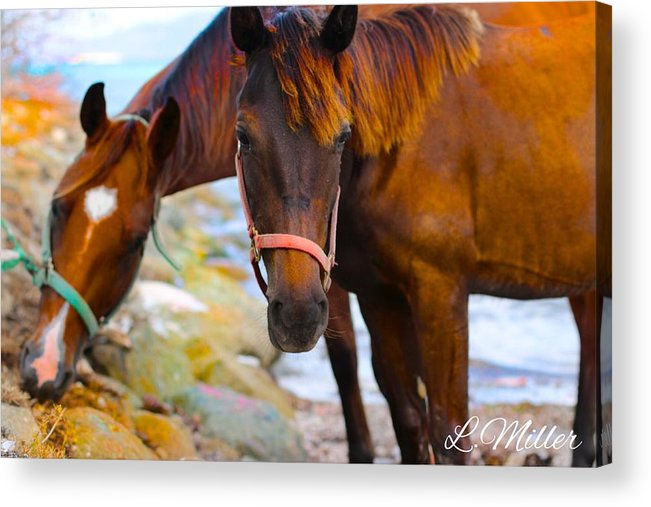 Landscape Acrylic Print featuring the photograph Horses On Jost by Leon Miller