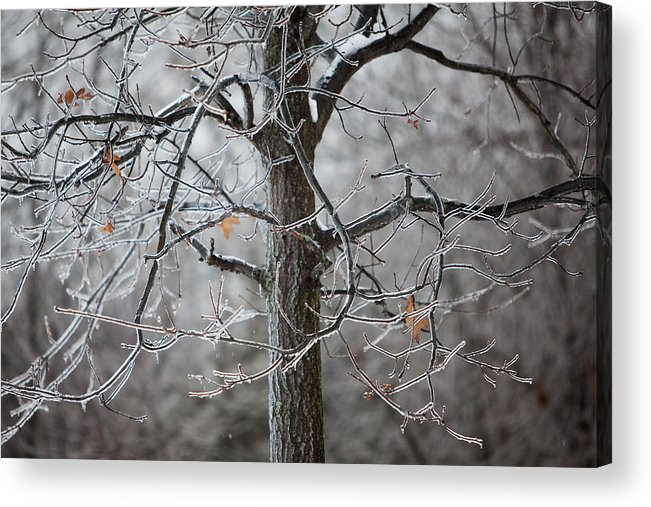 Nature Acrylic Print featuring the photograph Ice Tree by Jane Melgaard
