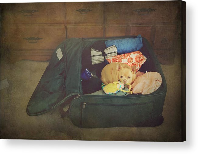 Dog Acrylic Print featuring the photograph I'm Going With You by Laurie Search
