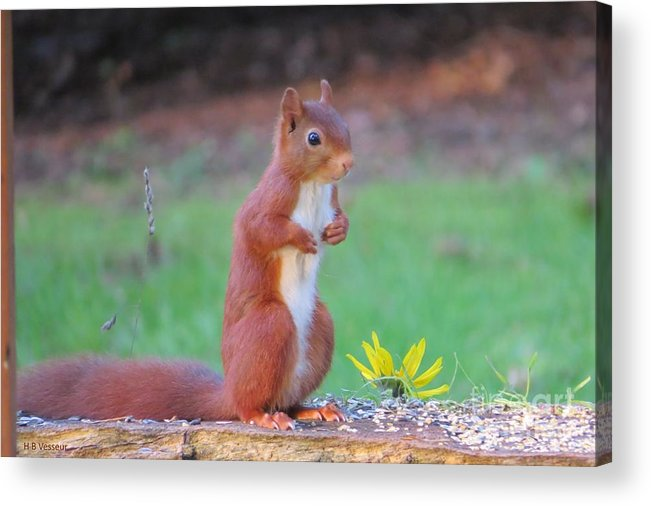 Nature Acrylic Print featuring the photograph I'm Here by B Vesseur