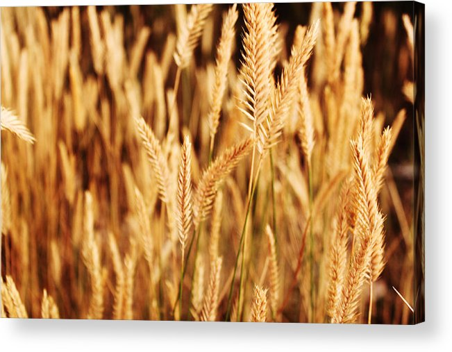 Field Acrylic Print featuring the photograph In The Field by Magdalena Green