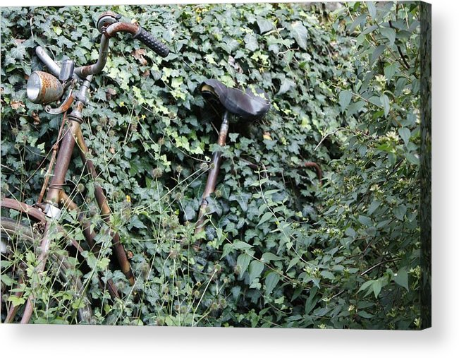Ivy Acrylic Print featuring the photograph Iron Ivy by Hans English