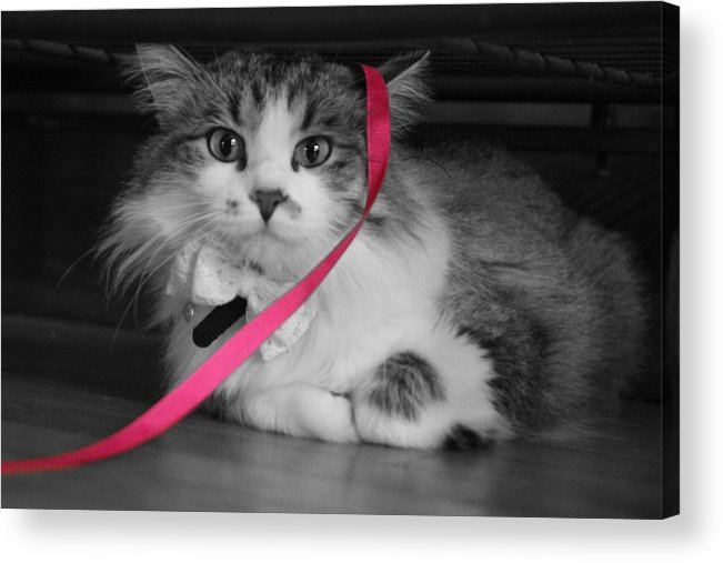 Cat Acrylic Print featuring the photograph Itz A Cat by Jimmy Taylor