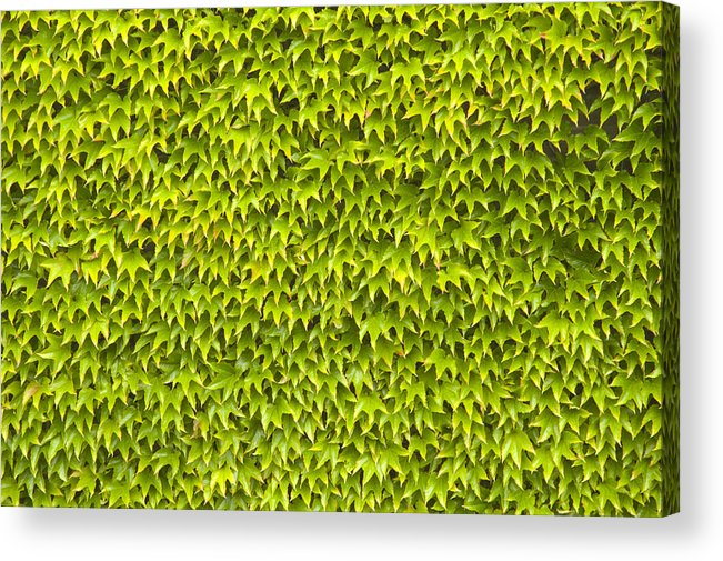 Abstract Acrylic Print featuring the photograph Ivy Wall by Andy Smy