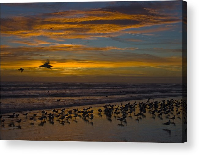 Beach Morning Sunrise Ocean Bird Birds Seagulls Gull Gulls Sand Water Wave Waves Cloud Sky Acrylic Print featuring the photograph Joyful Gathering by Andrei Shliakhau