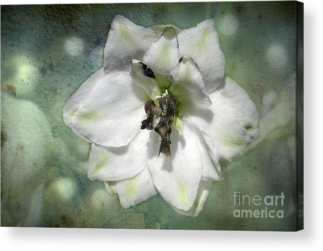 Flower Acrylic Print featuring the photograph Just A Flower by Teresa Zieba
