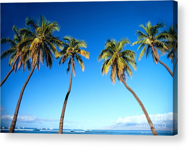 Bark Acrylic Print featuring the photograph Lahaina Palms by Carl Shaneff - Printscapes