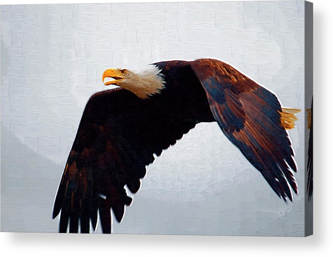 Eagles Acrylic Print featuring the painting Large Bald Eagle by Clarence Alford