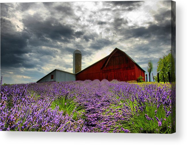 Landscape Acrylic Print featuring the photograph Lavender Field by Russell Todd