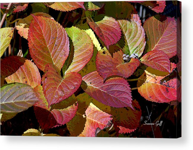 Leaf Acrylic Print featuring the photograph Leaf Jazz by Suzanne Gaff