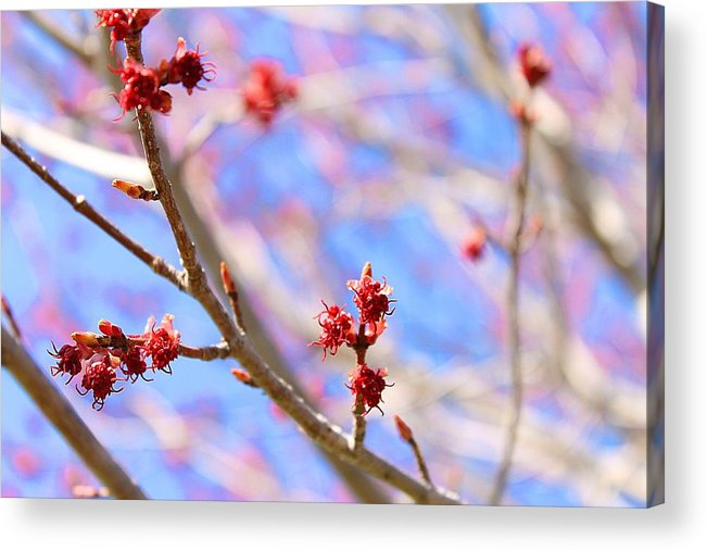 Hovind Acrylic Print featuring the photograph Leaves Are Coming by Scott Hovind