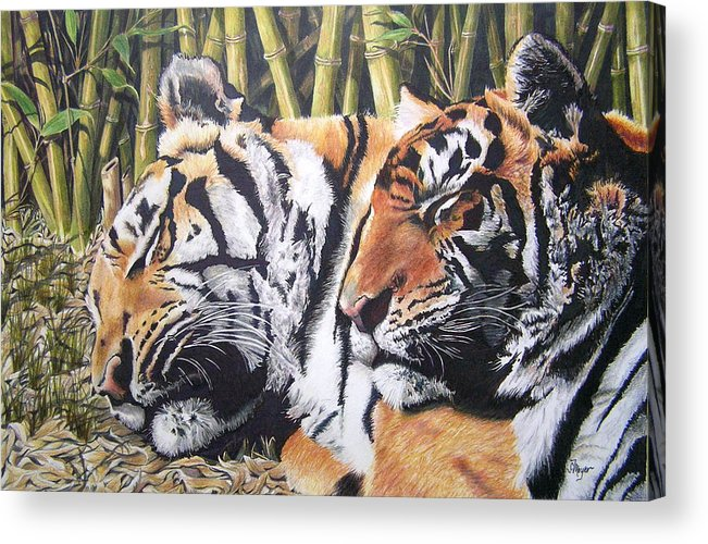Animals Acrylic Print featuring the drawing Let Sleeping Tigers Lie by Susan Moyer