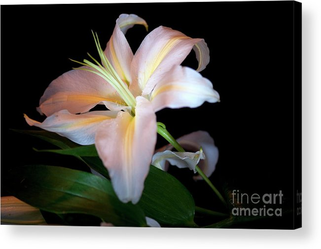Flower Photograph Acrylic Print featuring the photograph Lilly by David Hollingworth
