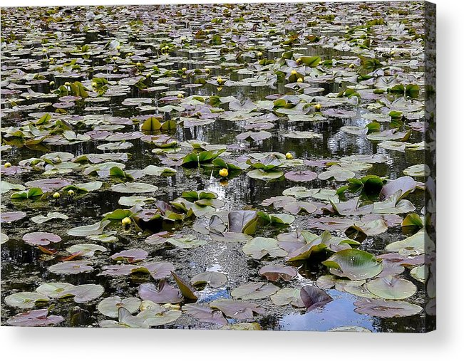 Lily Pond Acrylic Print featuring the photograph Lily Pond by Sagittarius Viking