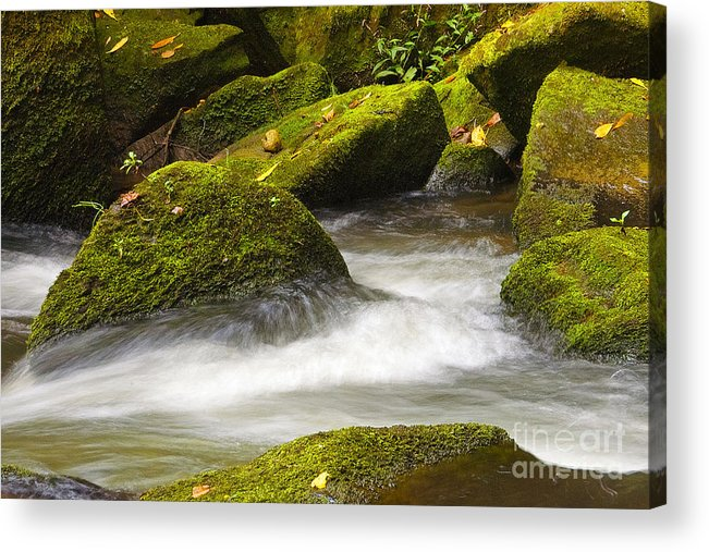 Living Acrylic Print featuring the photograph Living Waters by Neil Doren