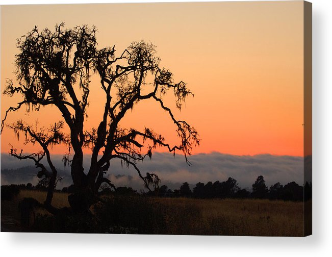 Tree Fog Landscape Weather Sunset Orange Nature Botanical Acrylic Print featuring the photograph Loan Tree Overlooking Fog by Jill Reger