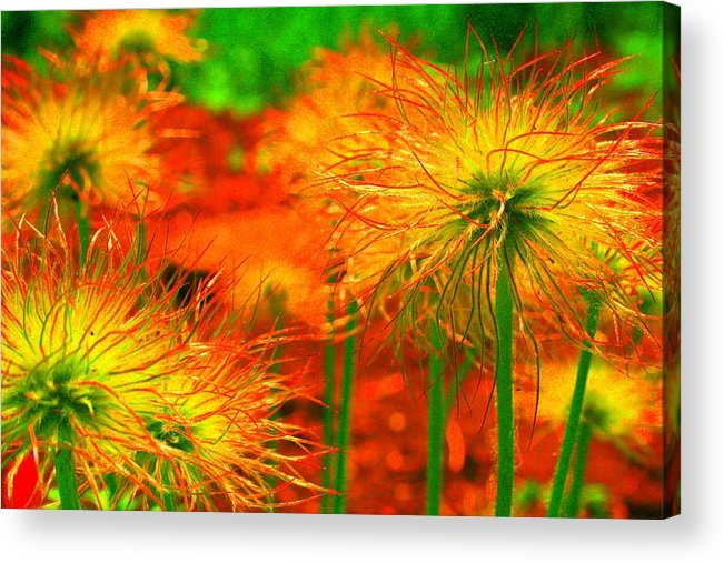 Landscape Paintings. Nature Acrylic Print featuring the photograph Lollipops by Julie Lueders