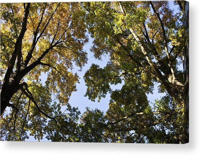 Fall Acrylic Print featuring the photograph Look Up by Teresa Mucha