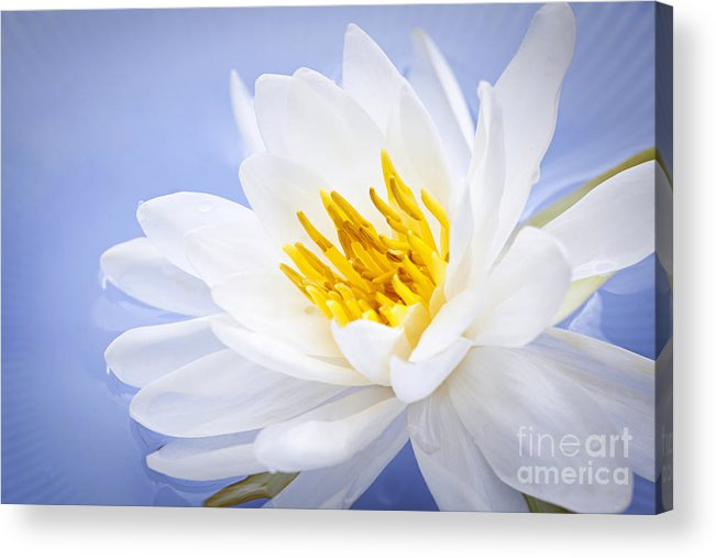 Lotus Acrylic Print featuring the photograph Lotus Flower by Elena Elisseeva